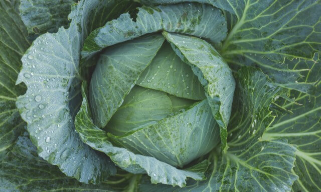 Cabbage slices