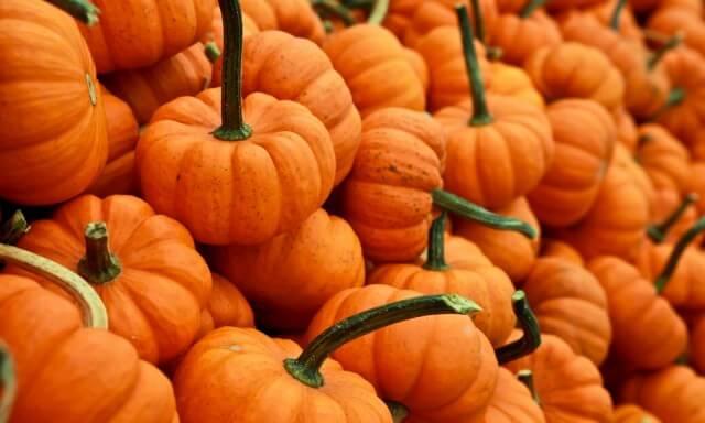 Pumpkin cubes